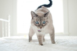 bed-blue-bright-cat-eyes-Favim.com-418247